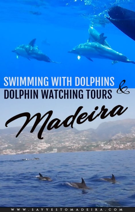 Madeira dolphins - Dolphin and whale watching tours Madeira Portugal. Swimming with dolphins in Portugal