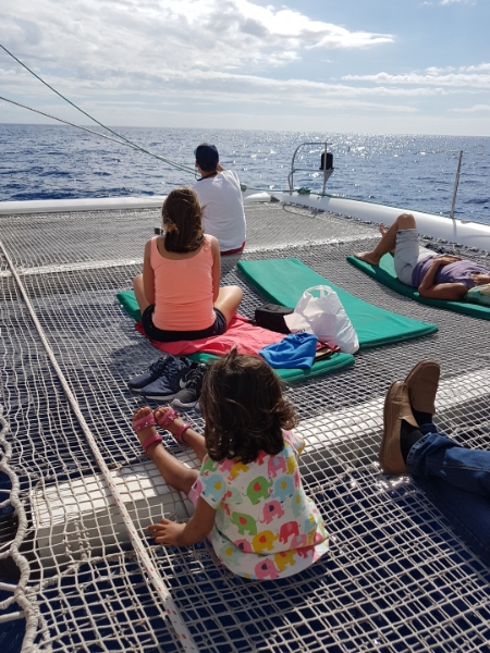 Madeira with kids - Best activities for families with on Madeira - Dolphin watching catamaran tours Funchal