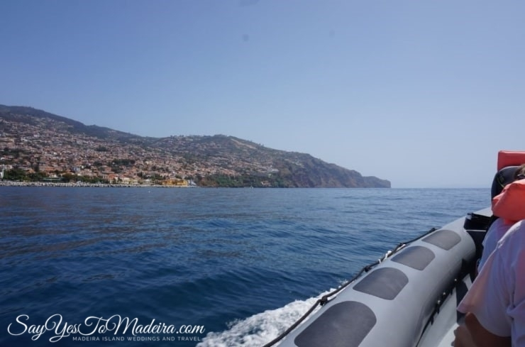 Swimming with dolphins Madeira, Portugal. Best dolphin watching tours in Europe: Rota dos Cetaceos Funchal
