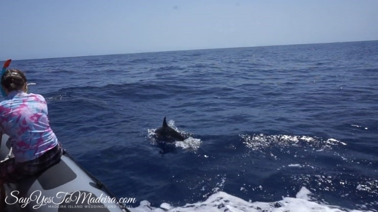 Madeira dolphins - Best dolphin and whale watching tours Madeira Portugal