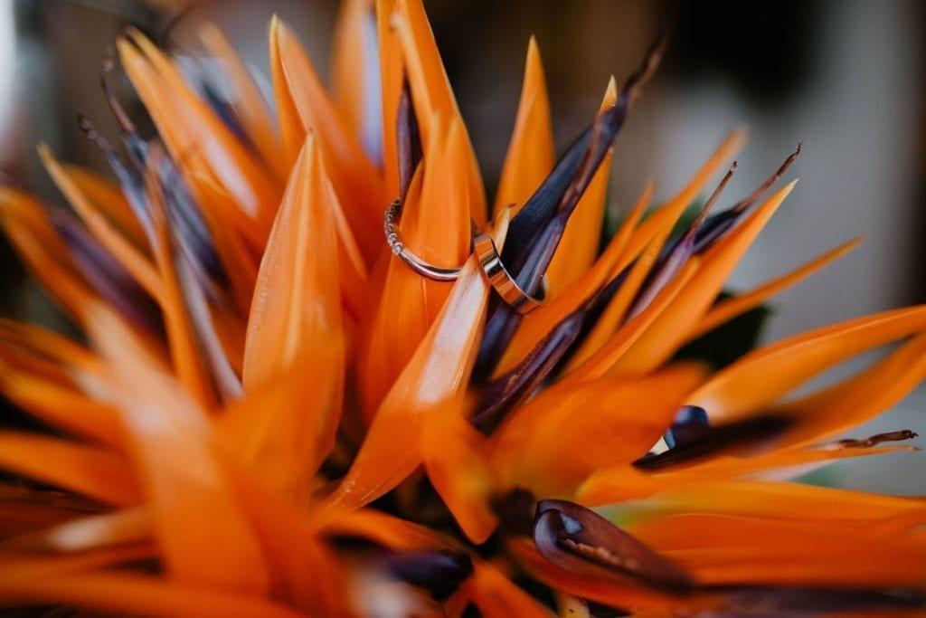 Tropical wedding - Bird of paradise flower - strelitzia flower wedding bouquet #tropicalwedding #strelitzia #birdofparadise #madeira #exoticflower Tropikalny ślub - bukiet slubny ze strelicji - piękny bukiet ślubny - inspiracje