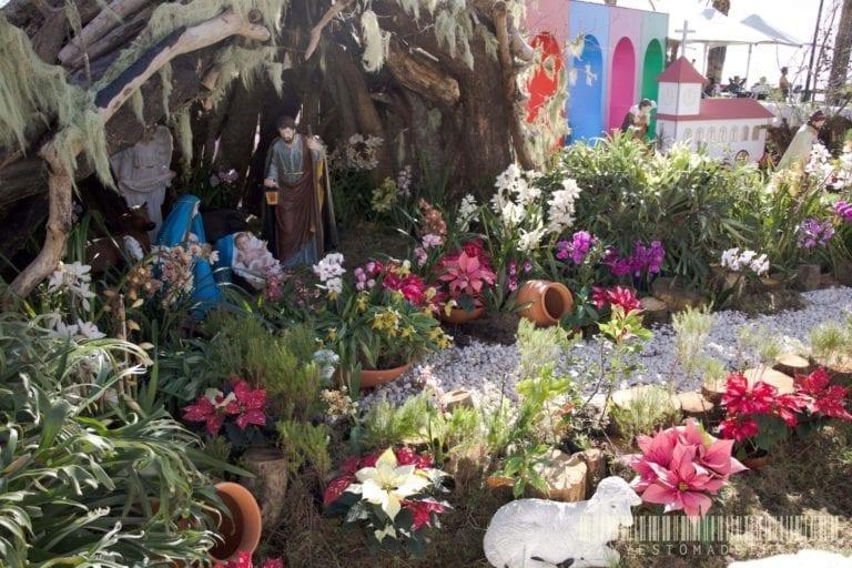 Christmas in Camara de Lobos, Madeira || Boże Narodzenie w Camara de Lobos na Maderze