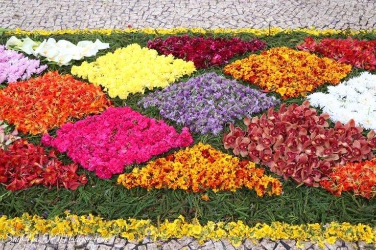 Flower Festival Funchal Madeira Portugal (27)