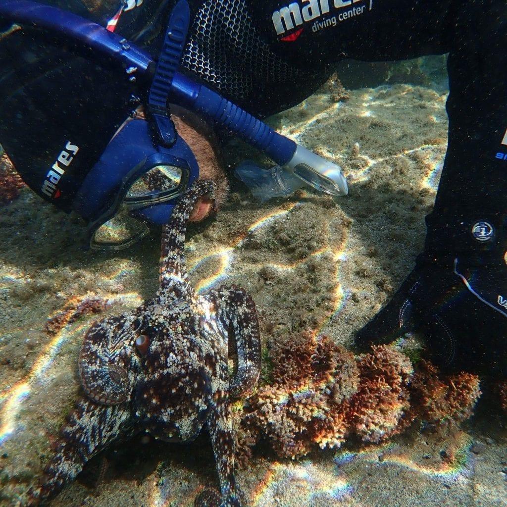 Snorkeling Tours Porto Santo Portugal - Nurkowanie z rurką na Porto Santo w Portugalii