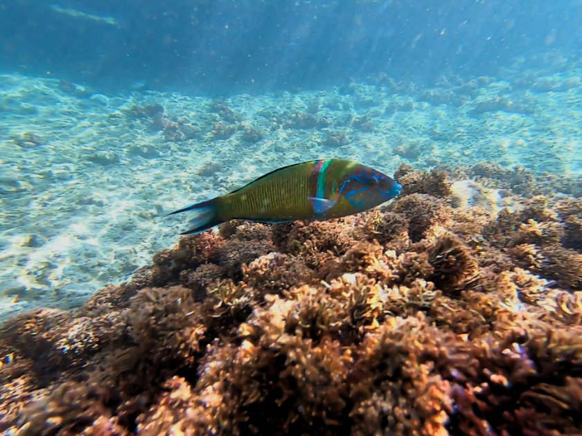 Europe snorkelling destinations - Best snorkelling spots Madeira and Porto Santo, Portugal
