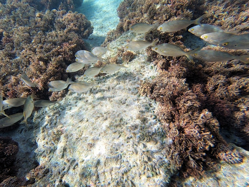 Europe snorkeling destinations - Best snorkelling spots Madeira and Porto Santo, Portugal