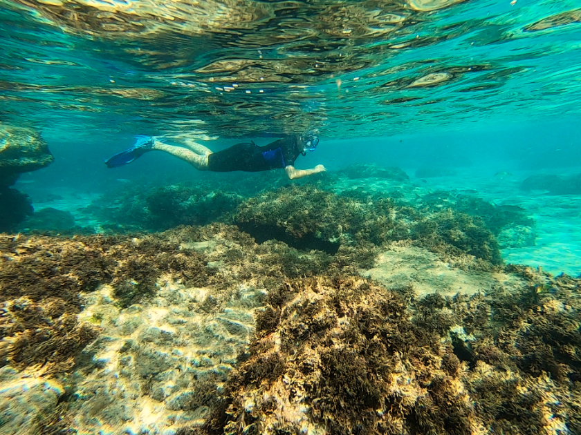 Snorkelling Madeira Islands - Best snorkelling spots Madeira and Porto Santo, Portugal