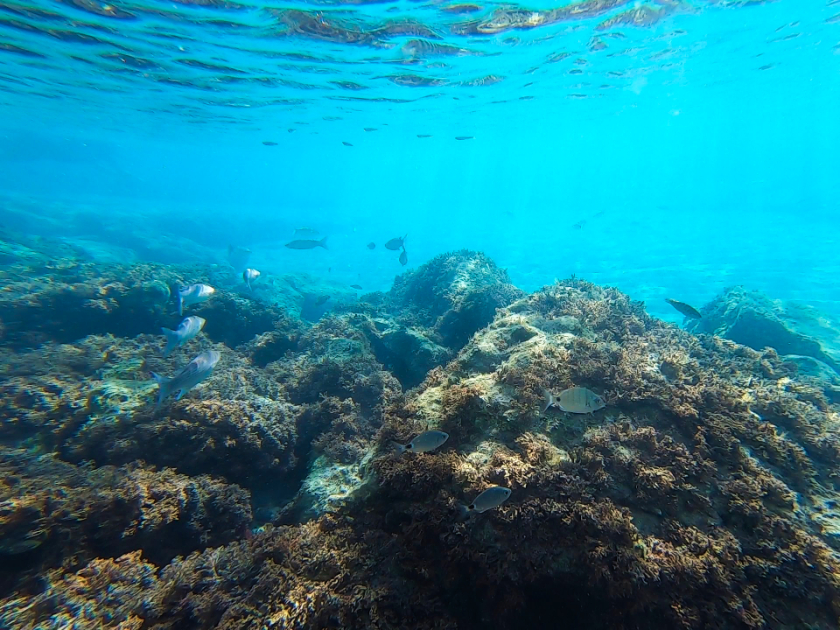 Where to go snorkel in Europe - Snorkelling in Madeira and Porto Santo, Portugal