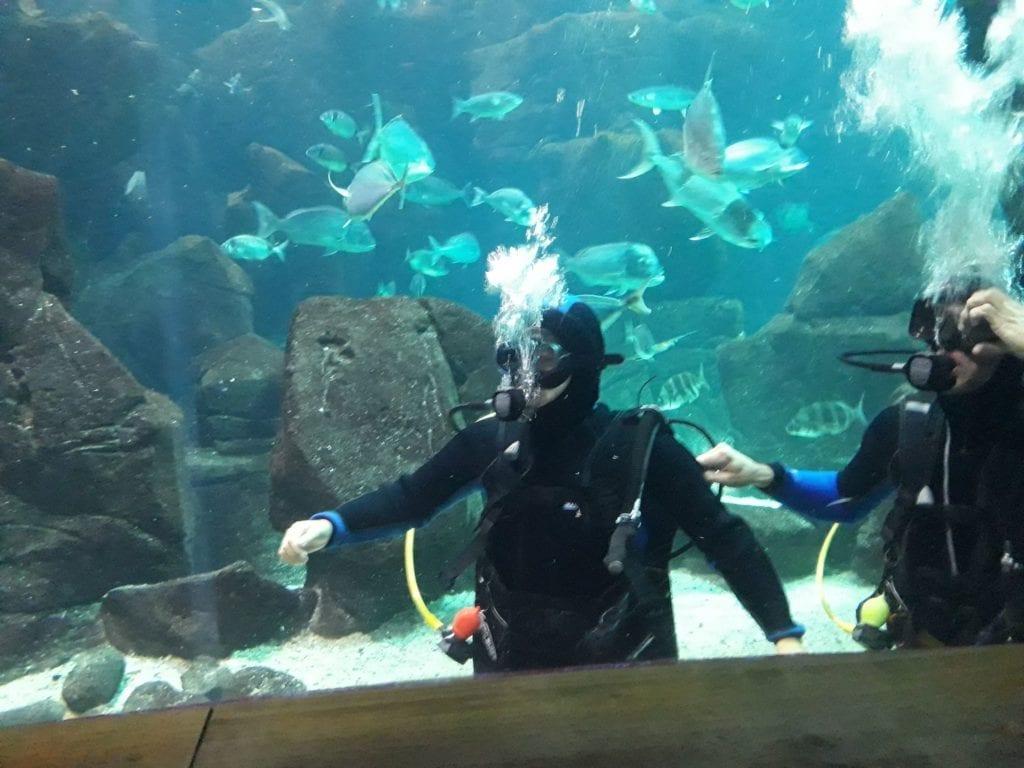 Erasmus Exchange Student in Madeira Island, Portugal: Diving in the Porto Moniz Aquarium