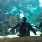 Erasmus Exchange Student in Madeira Island, Portugal: Diving in the Porto Moniz Aquarium
