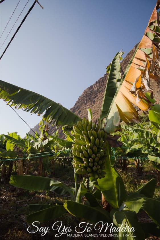 Atrakcje w okolicach Funchal na Maderze - Faja dos Padres. Plaża, kąpielisko, kolejka linowa i ogrody bananowe na Maderze. Nietypowe miejsca na Maderze, które trzeba zobaczyć.