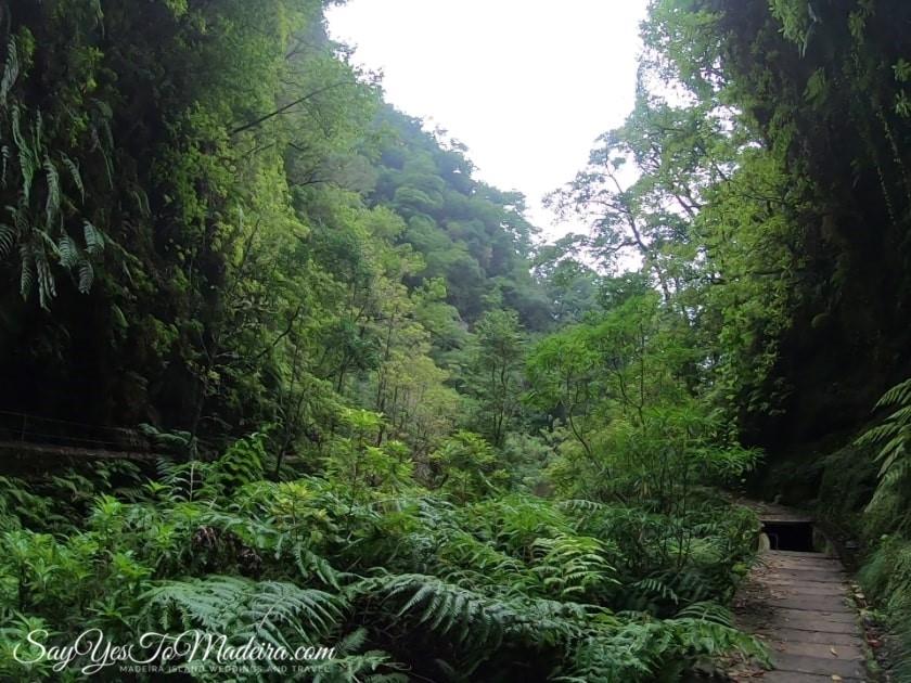 Best rated levada walks Madeira Island: Levada Faja do Rodrigues. Sao Vicente Madeira