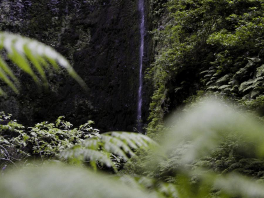 Caldeirão Verde (PR9) Walk - Best hikes Madeira island