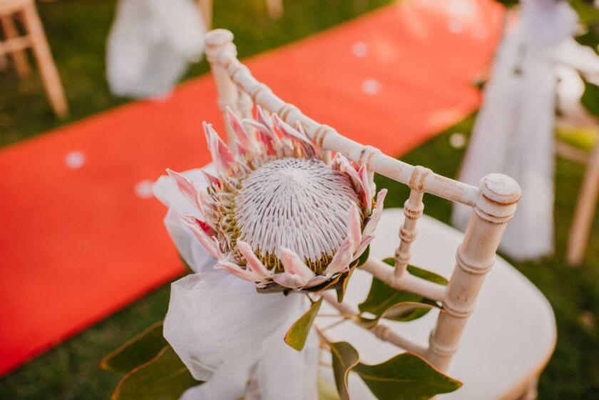 Różowa Protea ślub I Ślub za granicą